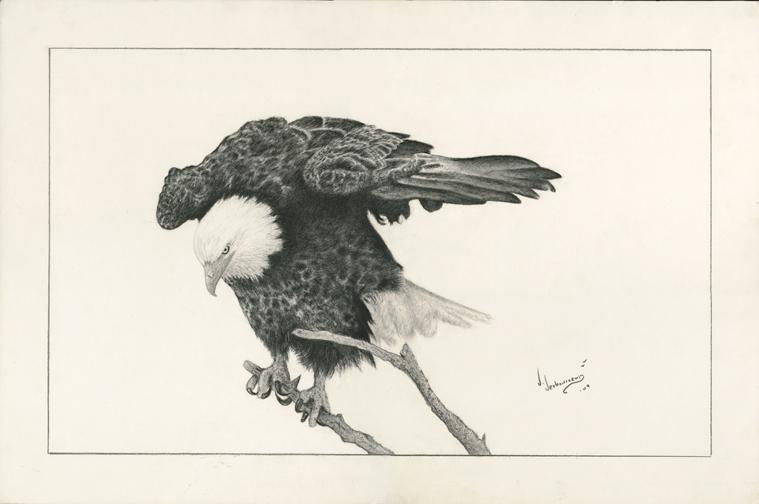 A-Bird's-Eye-View