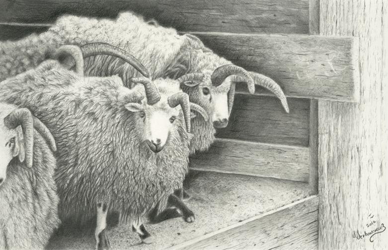 Woolly-Coats.jpg